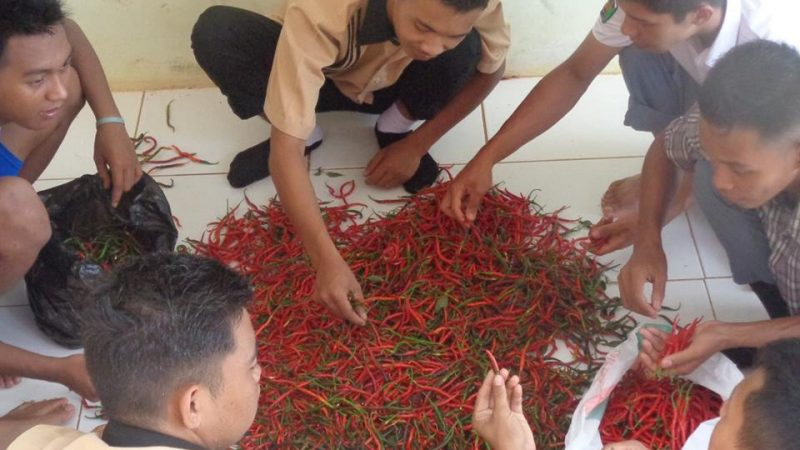 Teaching Factory Agribisnis Tanaman